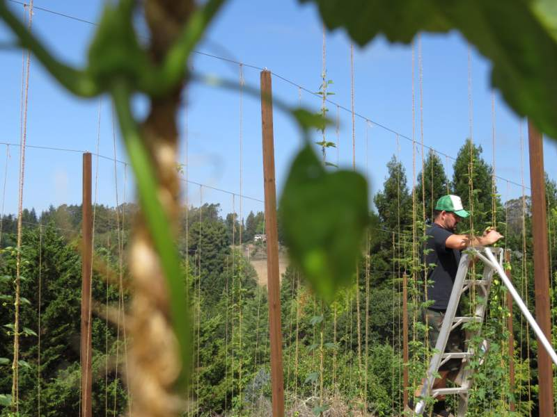 Craft beer depends on local agriculture.